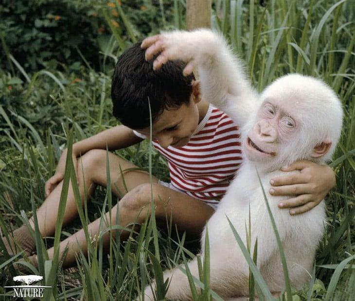 gorila blanco jugando con  un nene