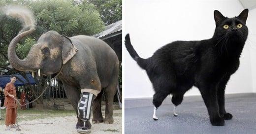 animales cuya vida cambio gracias a una protesis
