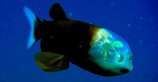 criaturas de mar parecen de ciencia ficcion