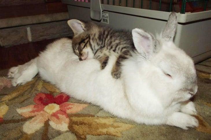 gatito y conejo blanco durmiendo juntos