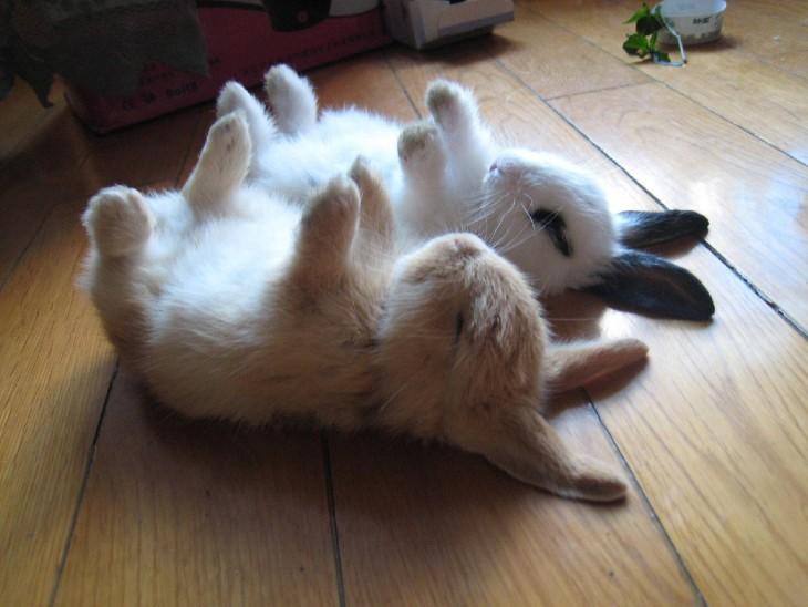 conejitos durmiendo patas arriba