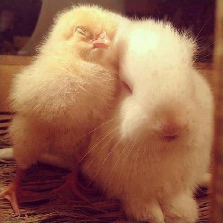 conejo y pollito durmiendo juntos