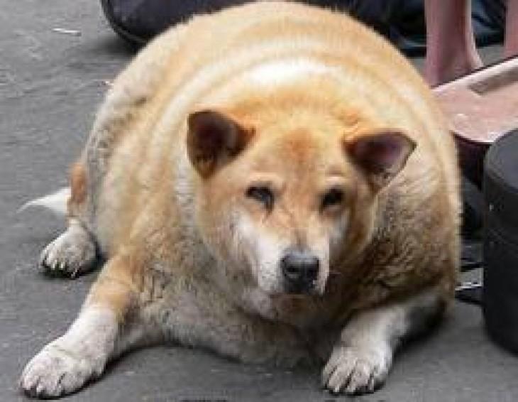 animales embarazados perra