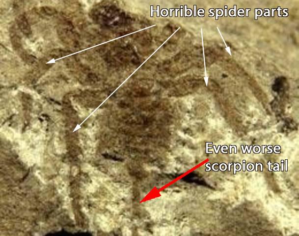 fósil de escorpión giganteante