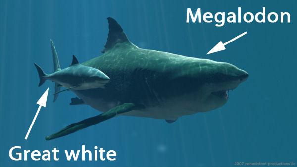 tiburón blanco y tiburón megalodon