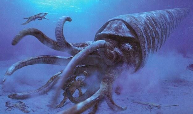 pulpo de la epoca del cetáceo