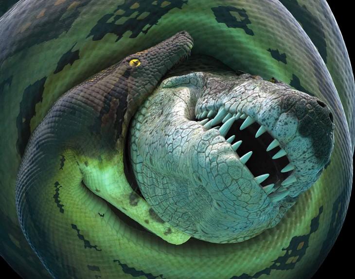anaconda comiendo a un cocodrilo