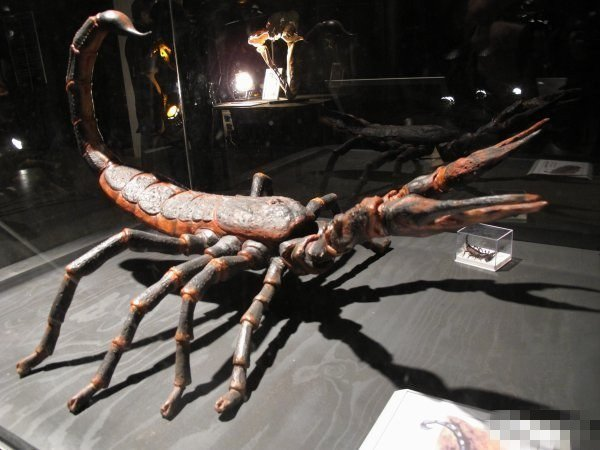 escorpión gigante en un museo