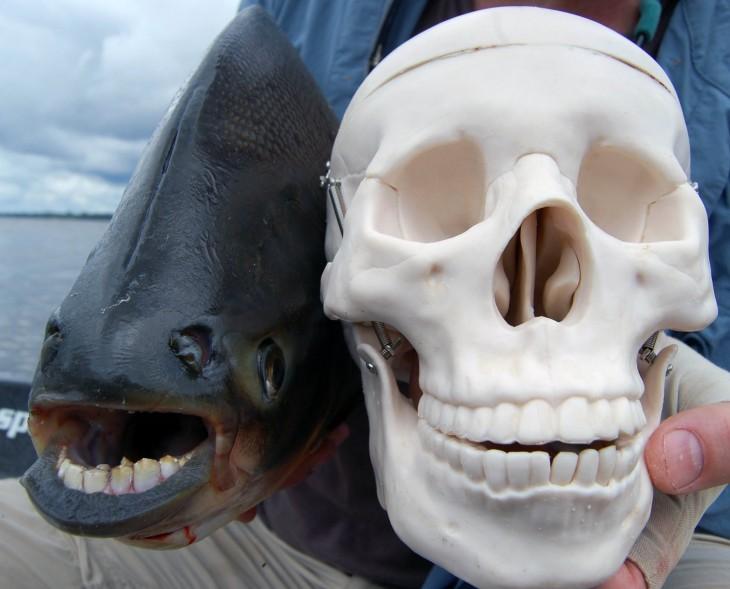 comparación de pescado con un cráneo