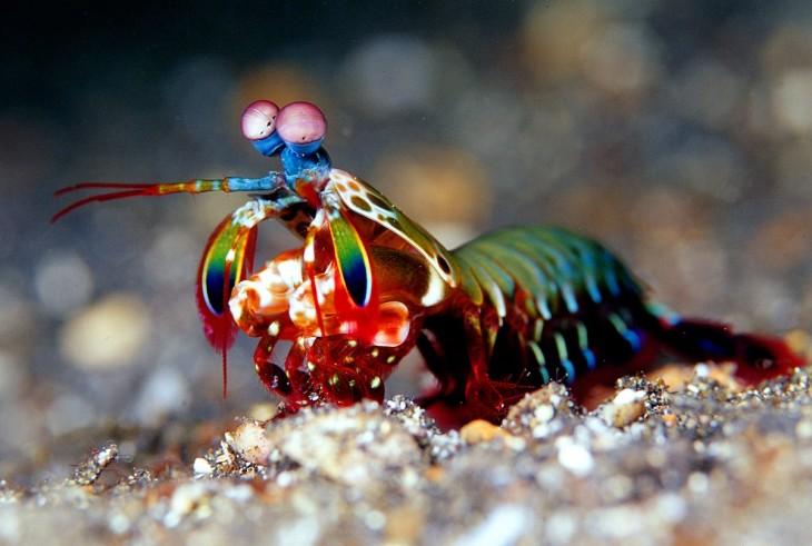 animal marino de distintos colores parado sobre las piedras del un estanque acuático
