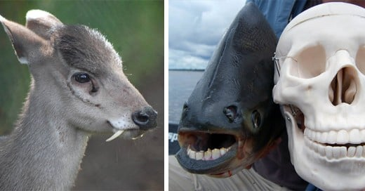 animales que no tenias idea de que existian