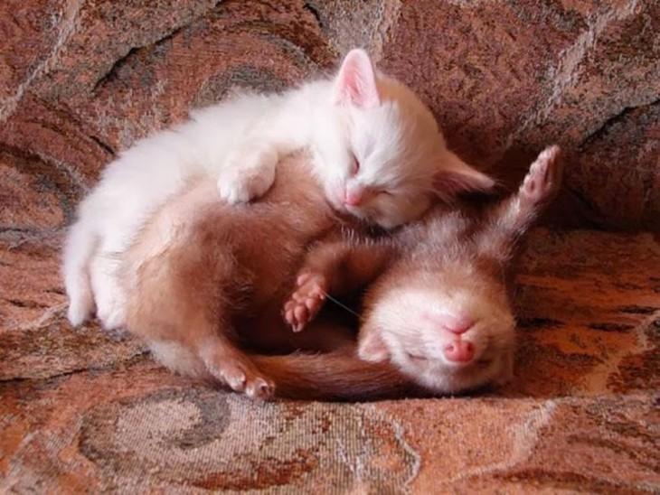 Gatito y comadreja durmiendo en el sillon
