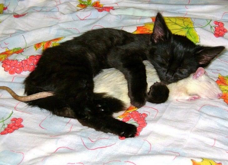 Gato y rata durmiendo tranquilamente en la cama