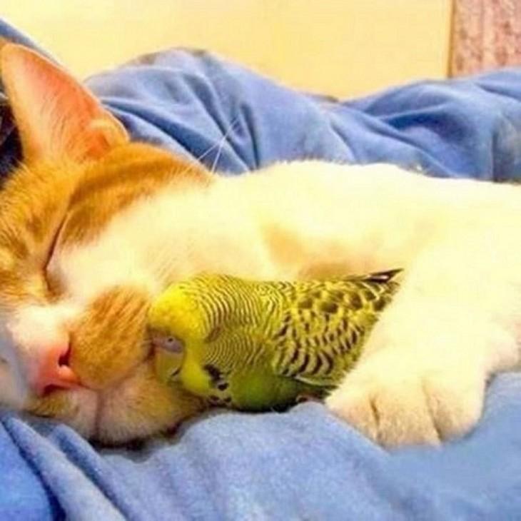 Gato y lorito durmiendo amigablemente