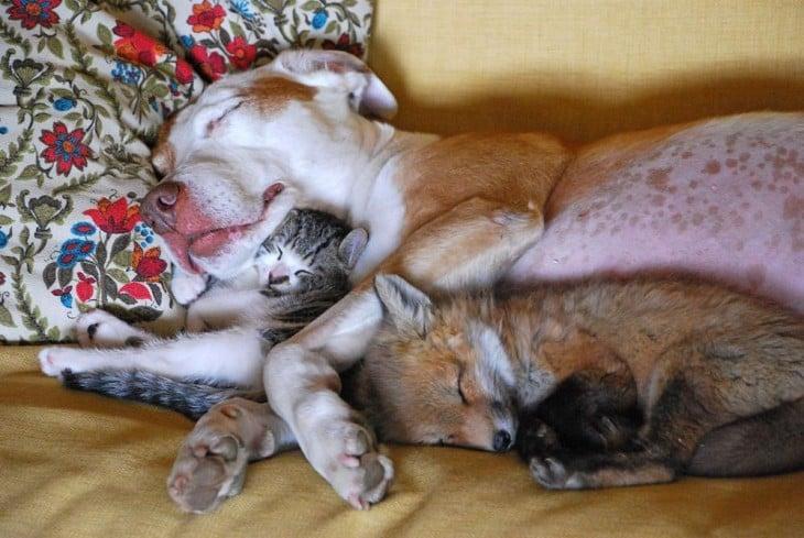 Perro y gato durmiendo