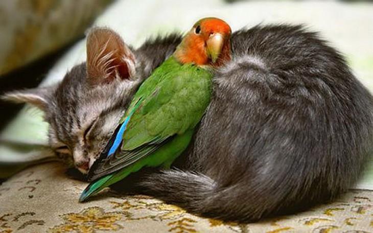 gato con loro verde durmiendo