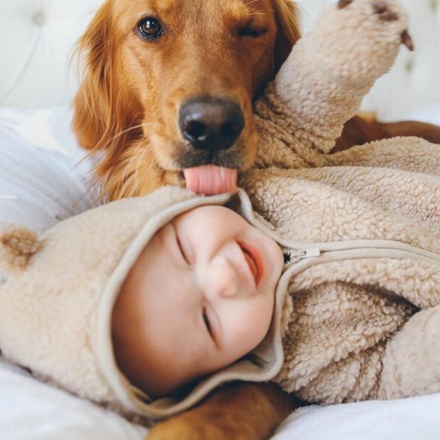 perro cerrando un ojo con un bebe acostado