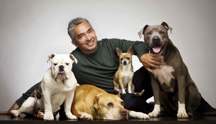 el encantador de perros con cuatro canes