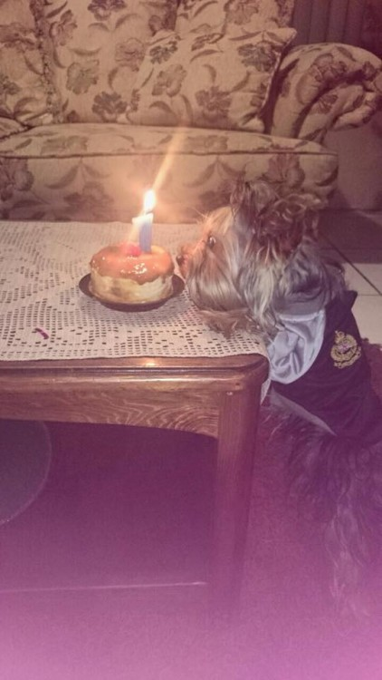 perro en su cumpleaños con un pastel