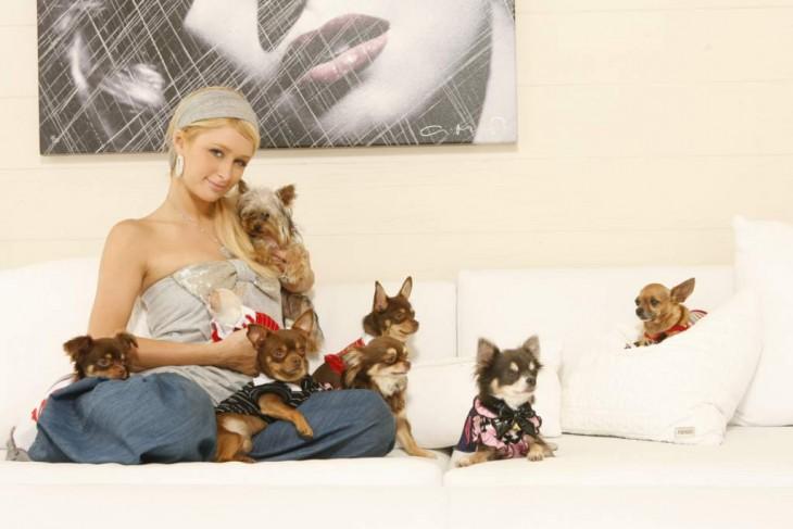 paris hilton sentada en una cama con ocho perros