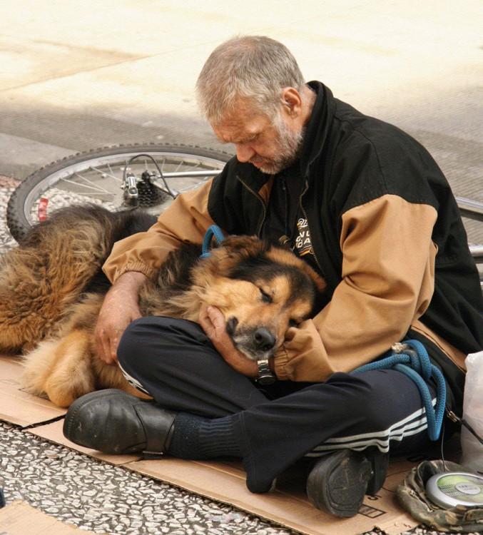 el perro el mejor amigo y no busca interéses (15)
