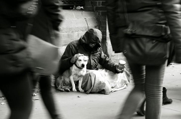 el perro el mejor amigo y no busca interéses (5)