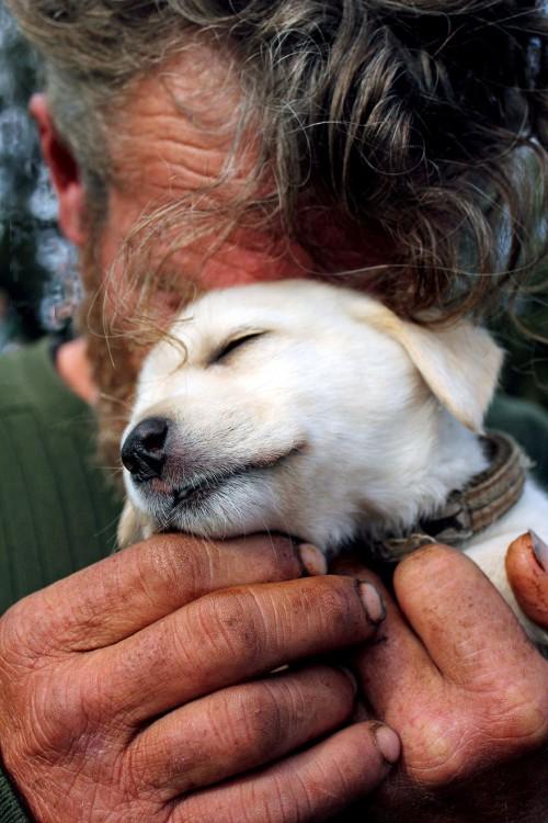 el perro el mejor amigo y no busca interéses (8)
