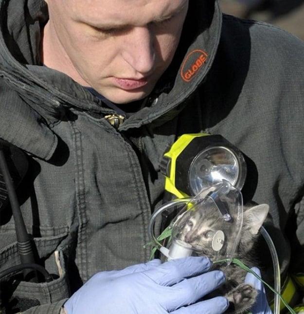 bombero dándole oxigeno a un gato