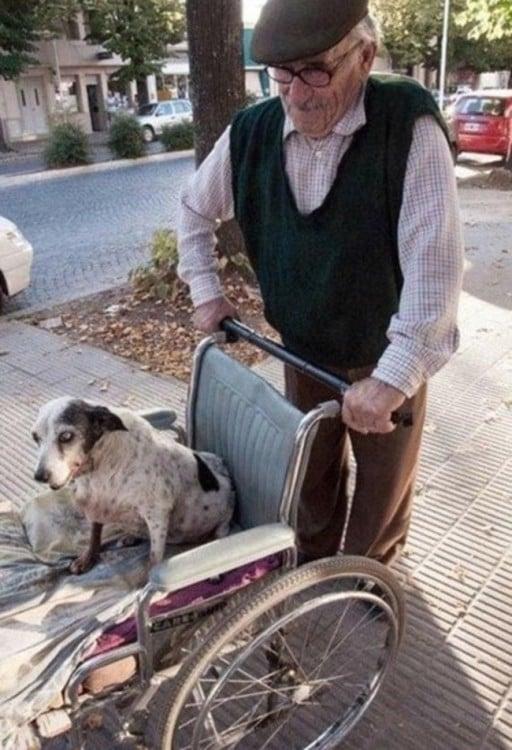 hombre de edad avanzada paseando a un perro en una silla de ruedas