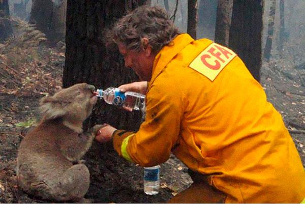 hombre dando agua a un koala