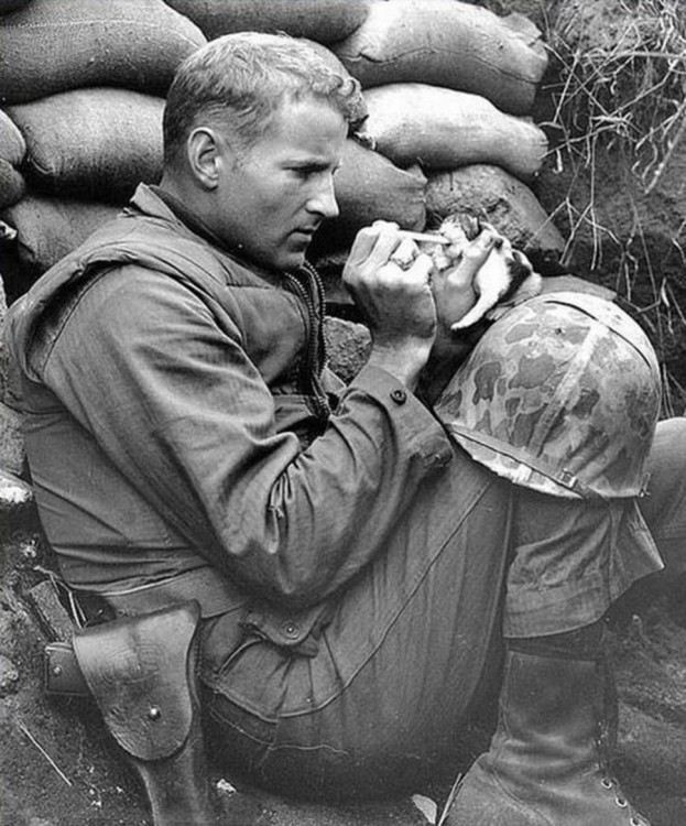 militar alimentando a un gato en una tinchera