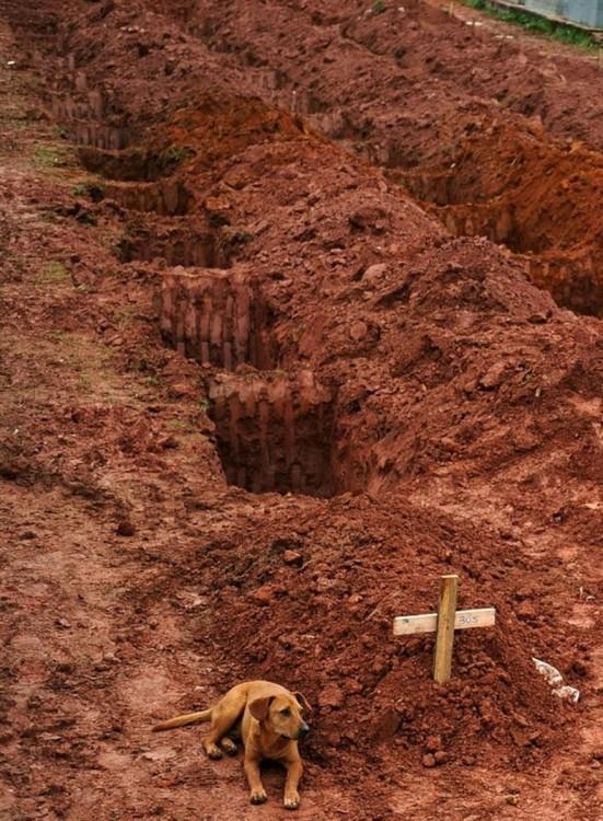 perro recostado junto a la tumba de su dueño