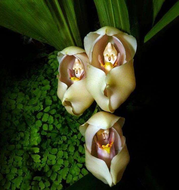 Flores en forma de bebés envueltos en cobijas