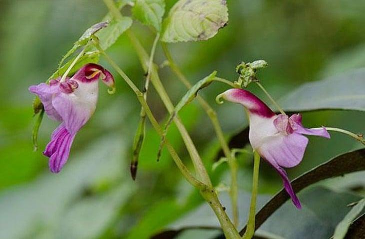 Flores que simulan dos loros volando