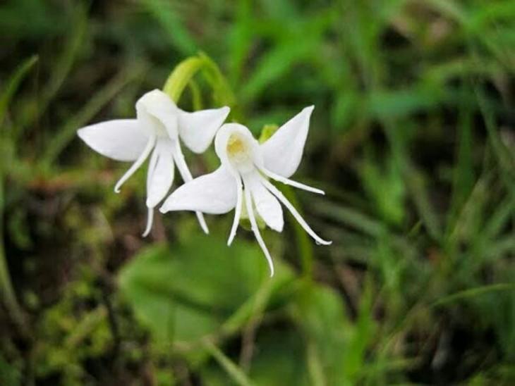 dos flores en forma de ángel