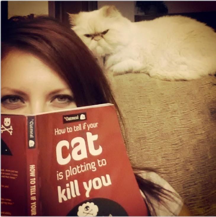 el gato te quiere matar