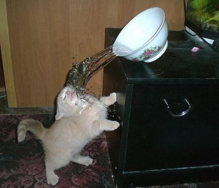 gatito con agua cayendole