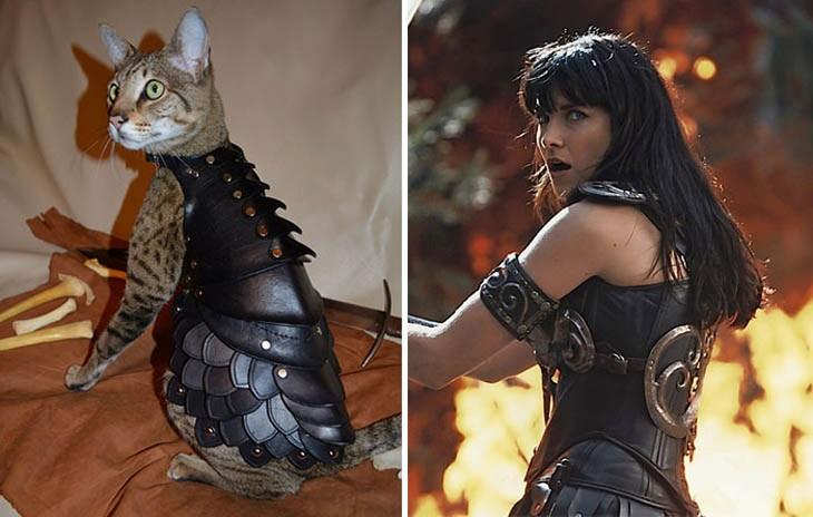 gato se parece a Xena, la princesa guerrera