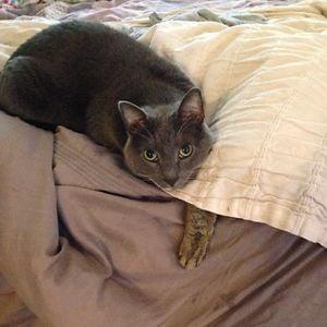 gatos camuflando se (en una cama