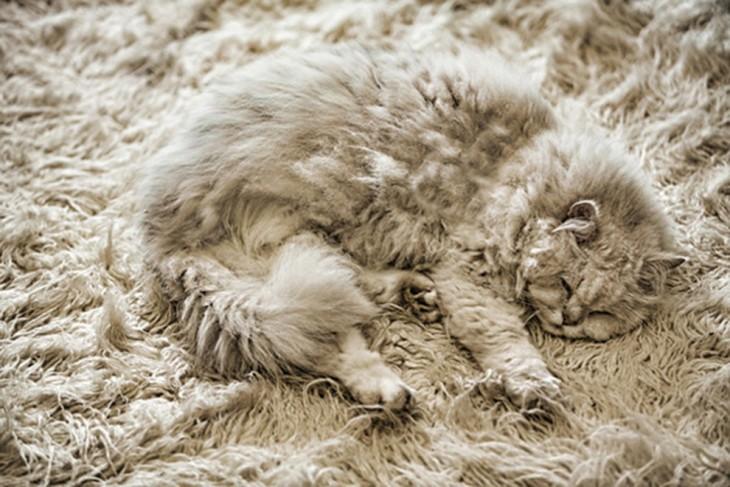 gatos camuflando se en alfombra gris