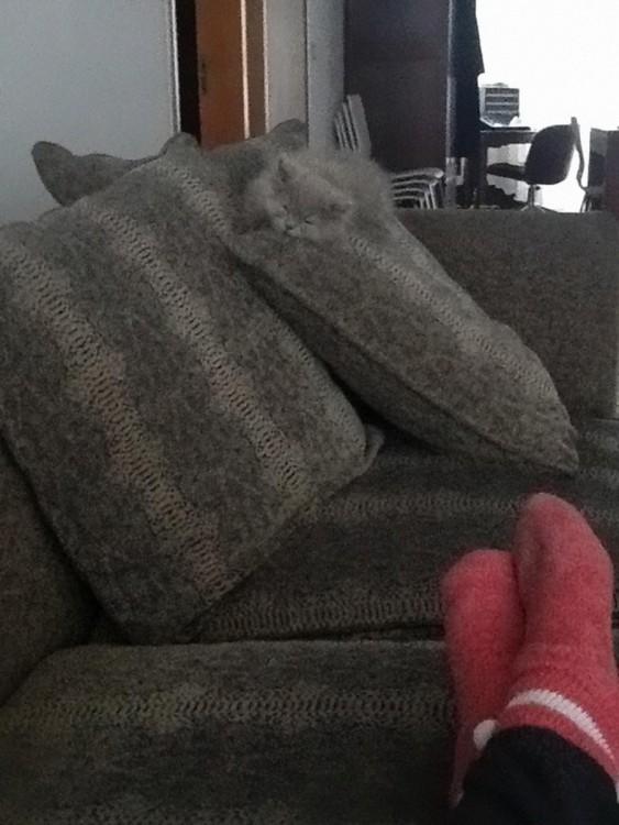gatos camuflandose en un sofá gris