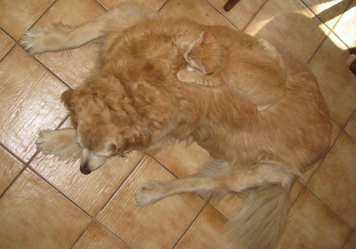 gatos sobre perro crema