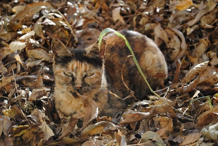 gatos camuflando se en las hojas caídas