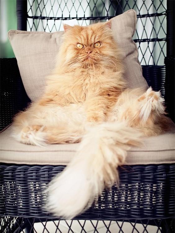 gato en sofá, pone mala cara