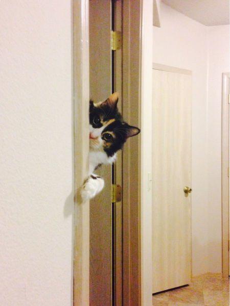 gato tras un marco de puerta