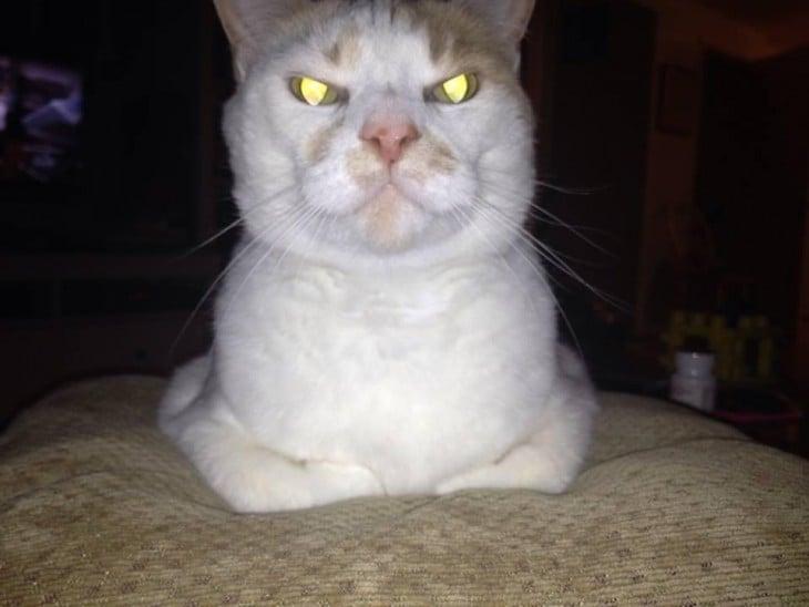 gatos psicopatas (5)