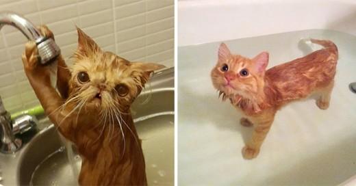 fotos de gatos que aman el agua