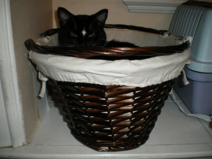 gato en un cesto