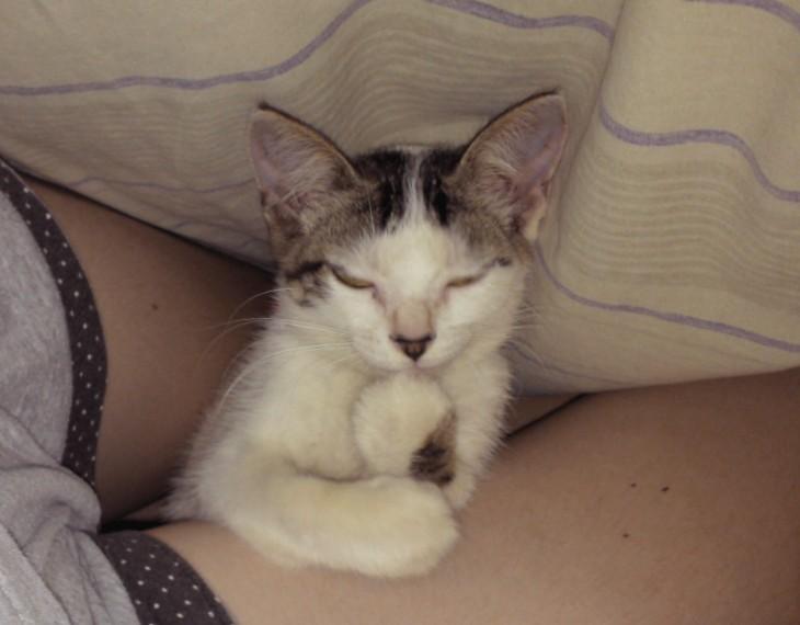 gato entre las piernas