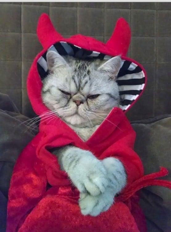 gatos siniestros (13)